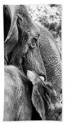 Elephant Ears Beach Towel
