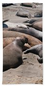 Elephant Seal Colony On Big Sur  Beach Towel