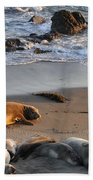 Elephant Seals At Piedras Blancas Beach Towel