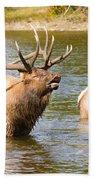 Elk Bugle Estes Lake Colorado Beach Towel