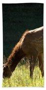 Elk Calf Beach Towel