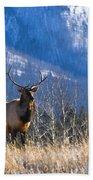 Elk In Forest, Banff National Park Beach Towel