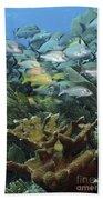 Elkhorn Coral With Schooling Grunts Beach Towel