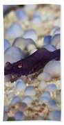 Emporer Shrimp On A Large Pin Cushion Beach Towel