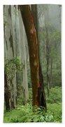 Australia Enchanted Forest Beach Towel