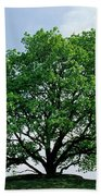 English Oak Quercus Robur In Spring Beach Towel