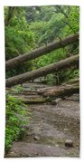 Entrance To Fern Canyon Beach Towel