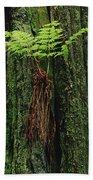 Epiphytic Fern Growing On Redwood Beach Towel
