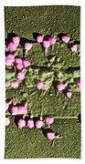 Escherichia Coli On A Cell Wall Beach Towel