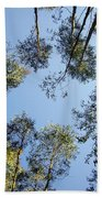 Eucalyptus Beach Towel by Carlos Caetano