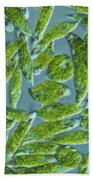 Euglena, Lm Beach Towel