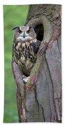 Eurasian Eagle-owl Bubo Bubo Looking Beach Towel