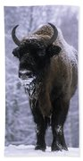 European Bison Bison Bonasus In Snow Beach Towel