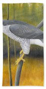 European Goshawk Beach Towel