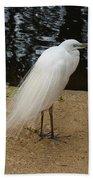 Exotic Bird Beach Towel