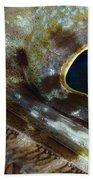 Extreme Close-up Of A Lizardfish Beach Towel
