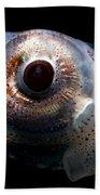Eye Flash Squid Beach Towel