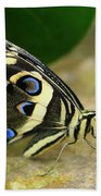 Eye To Eye With A Butterfly Beach Towel