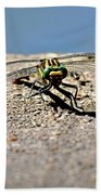 Eye To Eye With A Dragonfly Beach Towel
