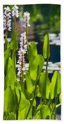 Fabulous Water Hyacinth  Beach Towel