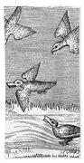 Falconry, 14th Century Beach Towel