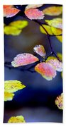 Fall Color Change Beach Towel