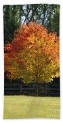 Fall Colored Tree Beach Towel