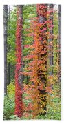 Fall Ivy On The Trees Beach Towel