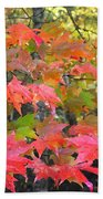 Fall Leaves Filtered Beach Towel