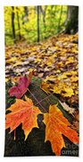 Fall Leaves In Forest Beach Towel