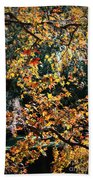 Fall Leaves Over Florida Pond Beach Towel