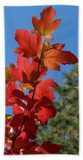 Fall Snowball Branch Beach Towel