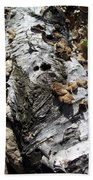 Fallen Birch Beach Towel