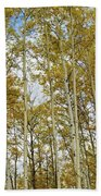 Falling For The Birch And Aspens Beach Towel