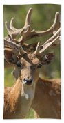 Fallow Deer Dama Dama Stags Beach Towel