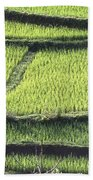 Farmer In Rice Paddy, Elevated View Beach Towel