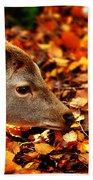 Fawn In Autumn Beach Towel