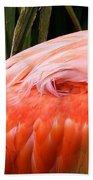 Feathers Beach Towel