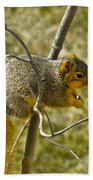 Feeding Tree Squirrel Beach Towel