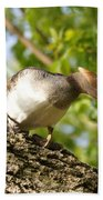Female Hooded Merganser Beach Towel