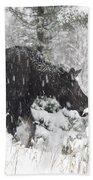Female Moose In Snowy Forest, Gaspesie Beach Towel