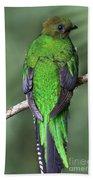 Female Resplendent Quetzal - Dp Beach Towel