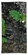 Fern And Coquina Beach Towel
