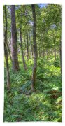 Fern Forest Beach Towel