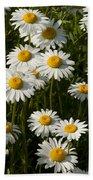 Field Of Oxeye Daisy Wildflowers Beach Towel