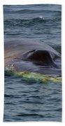 Fin Whale Charging Beach Towel