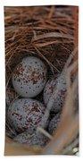 Finch Nest With Eggs  Beach Towel