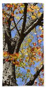 Fire Maple Beach Towel