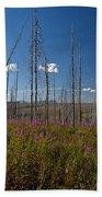 Fireweed  Epilobium Angustifolium Glacier National Park Usa -1 Beach Towel