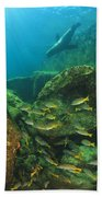 Fish And A Sea Lion In The Water At Los Beach Towel